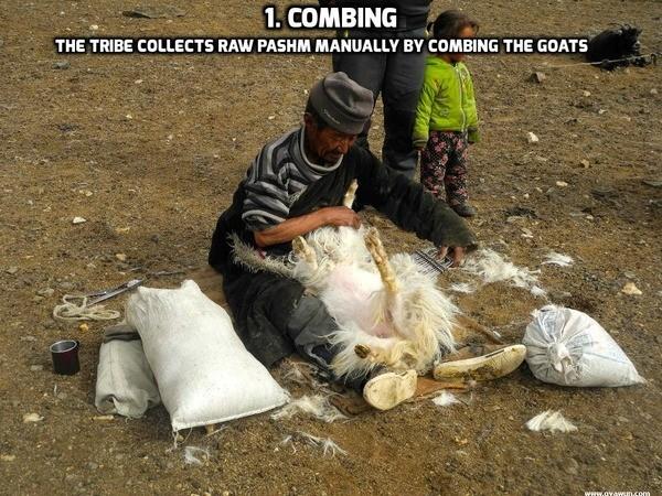 Making of Kashmiri Pashmina Shawls