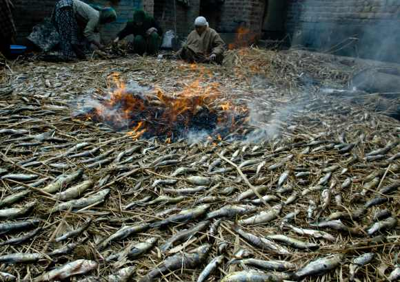 smoked_fish_kashmir_phari